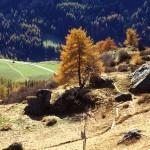 Goldener Herbst in Prägraten, im Nationalpark Hohe Tauern
