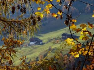 Herbstromantik_Mariach